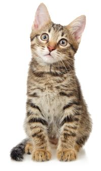 Real cat clipart clipart library stock 10 Best images about Animaux domestique on Pinterest | Two dogs ... clipart library stock