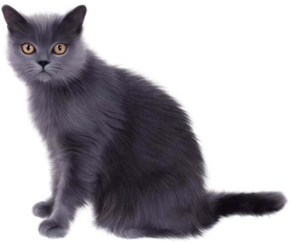 Real cat clipart graphic free library Realistic Cat Clipart - Clipart Kid graphic free library