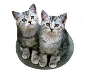 Real cat clipart png download Cat Clip Art, Cat Sketches, Cat Drawings & Graphics png download