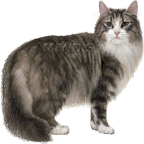 Real cat clipart clip royalty free library Real cat clipart - ClipartFest clip royalty free library
