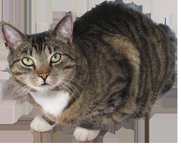 Real cat clipart clip download Real cat clipart - ClipartFest clip download