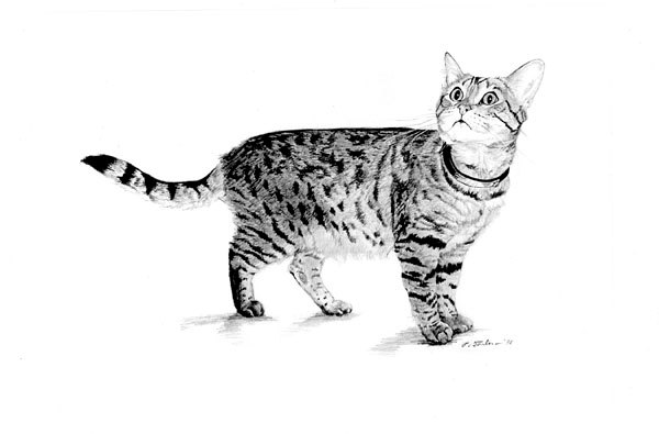 Real cat drawing clipart picture library download Realistic Cat Clipart - Clipart Kid picture library download