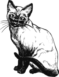 Real cat drawing clipart banner freeuse Siamese Cat Drawing Clip Art at Clker.com - vector clip art online ... banner freeuse
