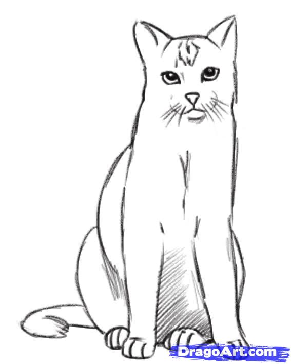 Real cat drawing clipart jpg royalty free library Realistic Cat Clipart - Clipart Kid jpg royalty free library