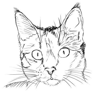 Real cat drawing clipart library 17 Best ideas about Cat Face Drawing on Pinterest | Cat doodle ... library