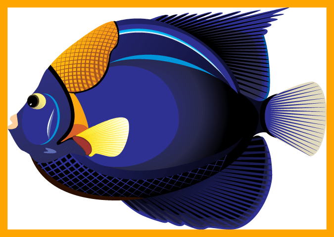 Real fish clipart image freeuse library Inspiring Collection Of Real Fish Clipart High Quality Picture Png ... image freeuse library