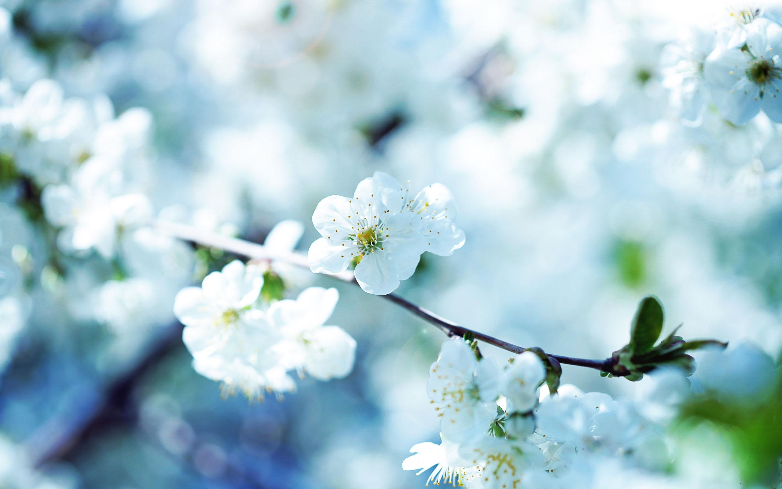 Real flower background images jpg transparent download Real flower background images - ClipartFest jpg transparent download