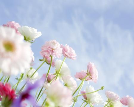 Real flower background images clip art download real flowers background - The Best Flowers Ideas clip art download