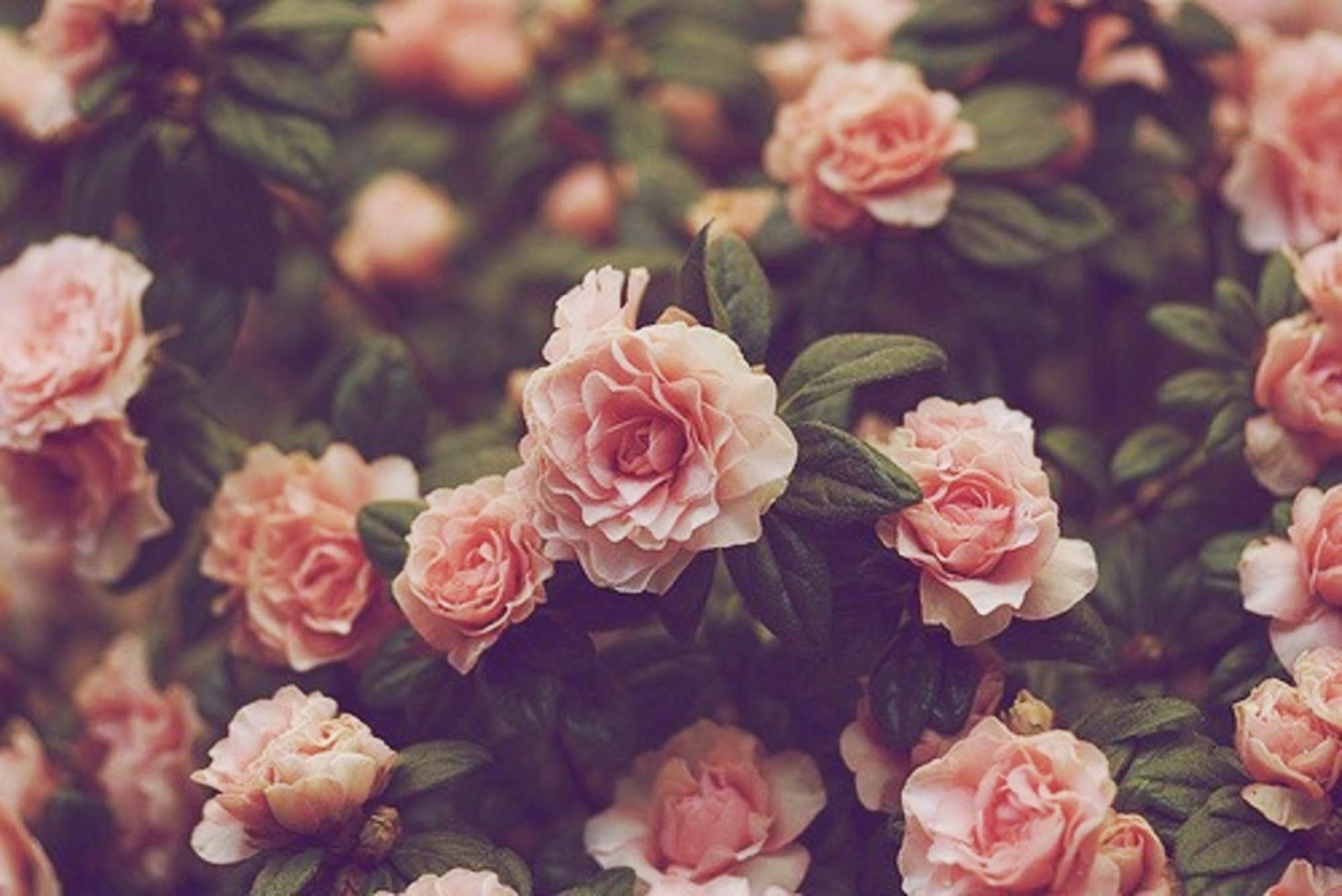 Real flower background images svg library download 10 Best ideaa: Vintage Flower Background Pinterestissä ... svg library download