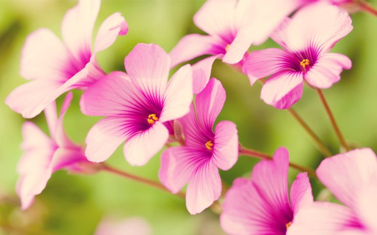Real flower background images image transparent library pretty flowers | free wallpaper of flowers: pretty Purple Verbena ... image transparent library