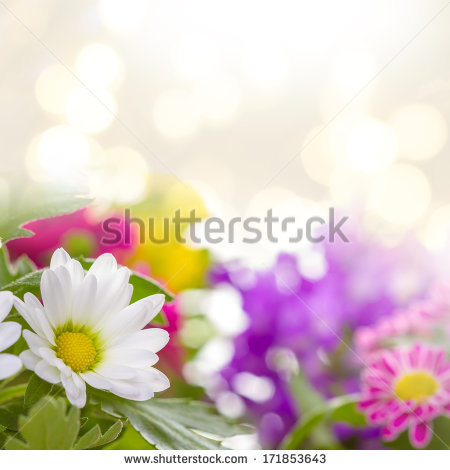 Real flower background images clip free Real Flowers Stock Photos, Royalty-Free Images & Vectors ... clip free