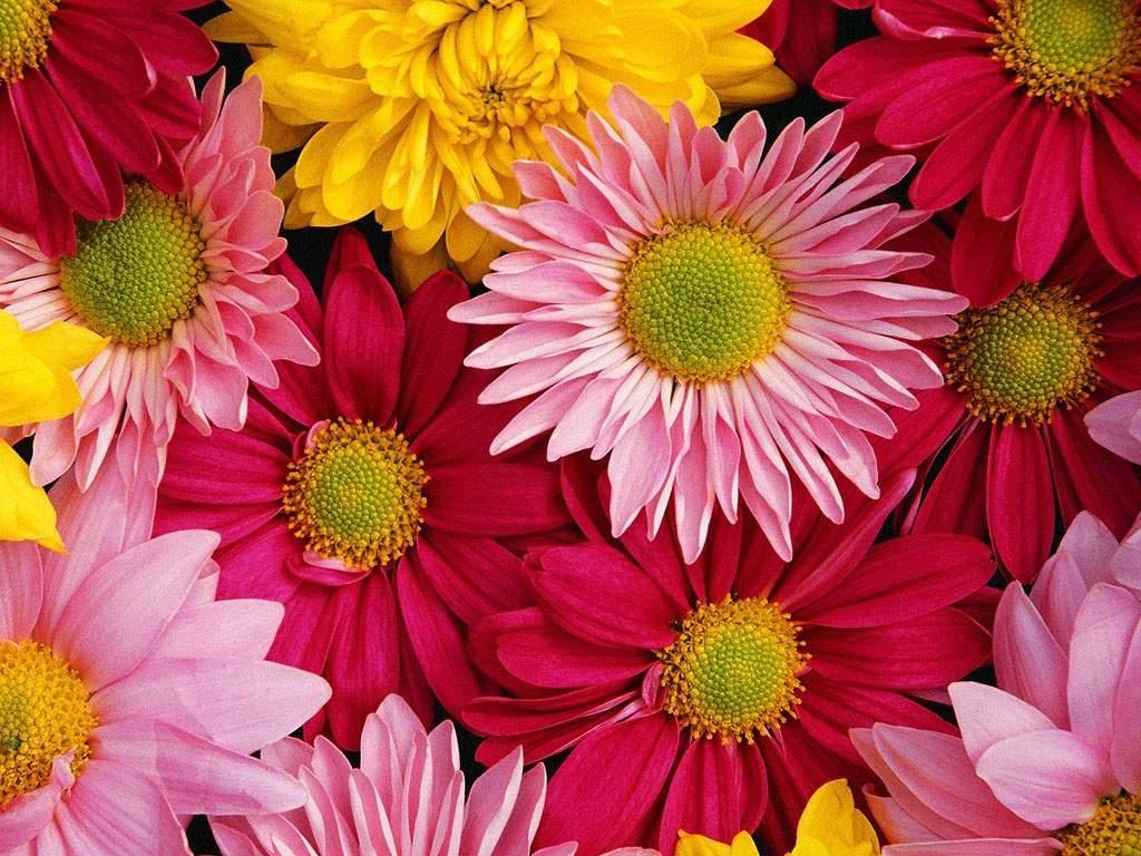 Real flower background images clip art freeuse download Flower Image For Desktop Backgrounds - Wallpaper Cave clip art freeuse download