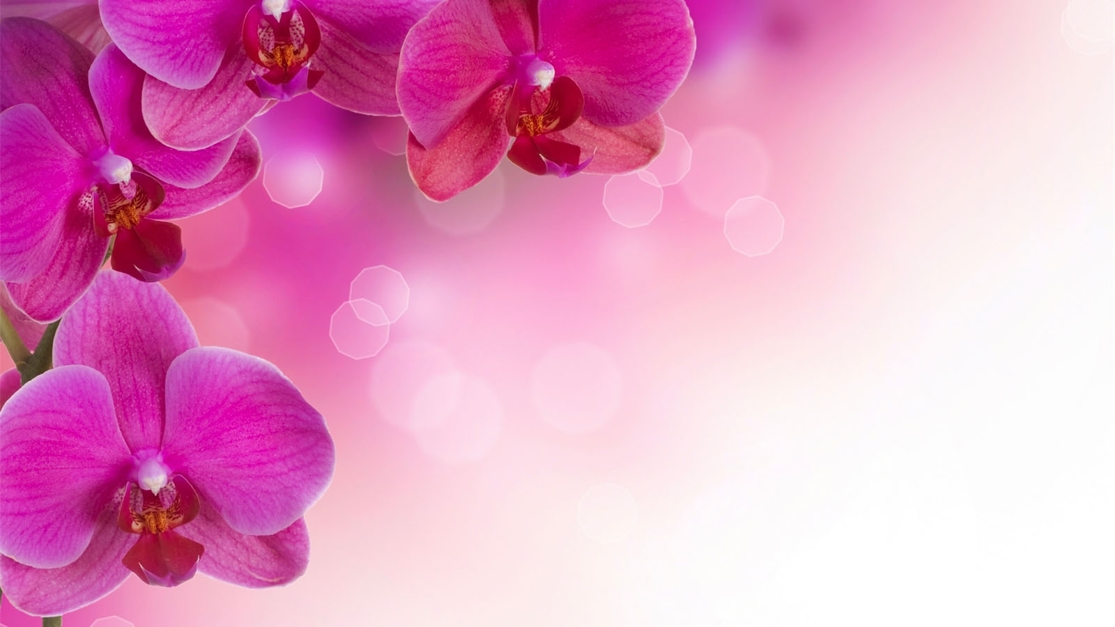 Real flower background images free Real flower background images - ClipartFest free