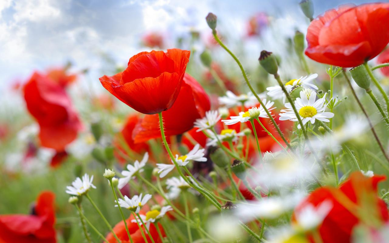 Real flower background images clip free stock real flowers background - The Best Flowers Ideas clip free stock