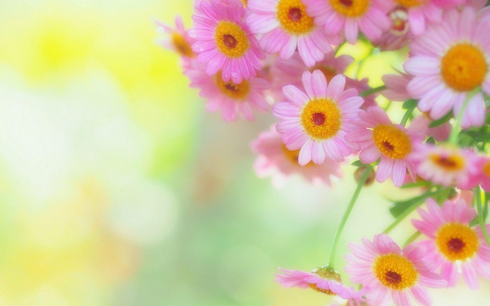 Real flower background images svg Real Flower Backgrounds - WallpaperPulse svg