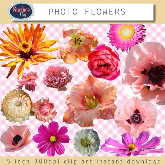 Real flower clipart vector Floral clip art flowers - Photo flowers Clip art Real flowers ... vector