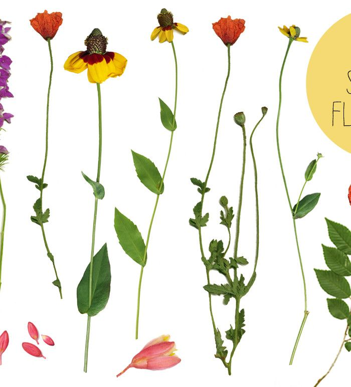 Real flower clipart clip royalty free stock Real Flower Clip Art by angie makes. These are real, spring flower ... clip royalty free stock