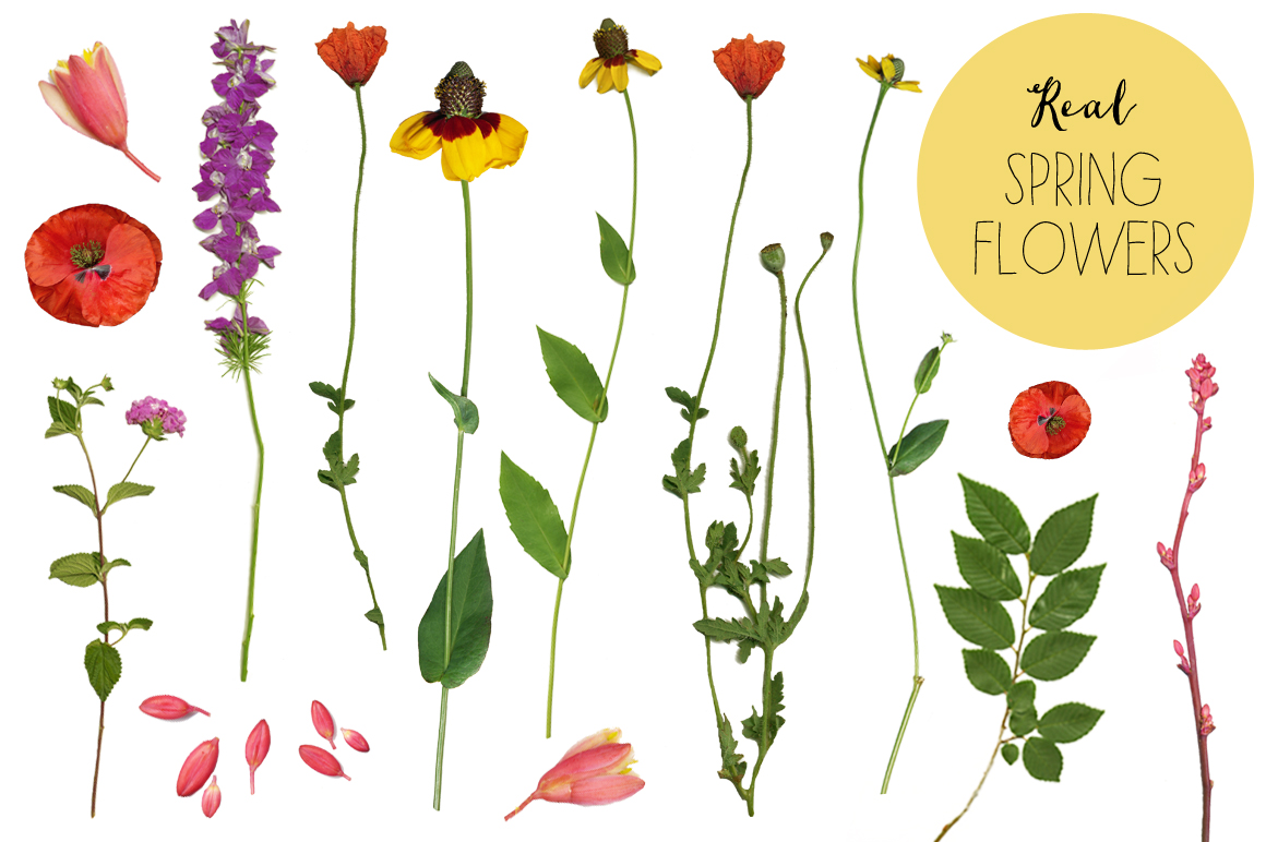 Real flower clipart clip royalty free 17 Best images about flower water color vector on Pinterest ... clip royalty free