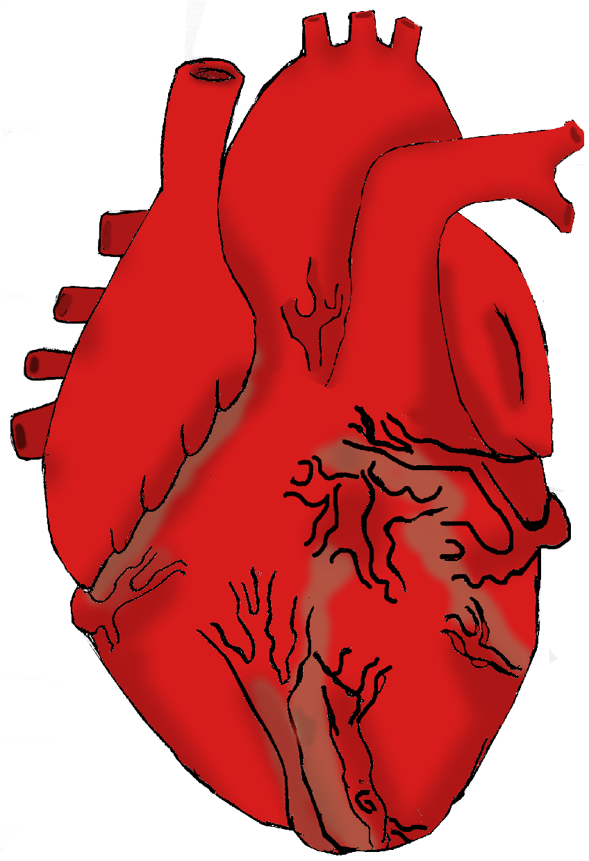 Real heart clipart jpg library download Real Heart Clipart - Clipart Kid jpg library download
