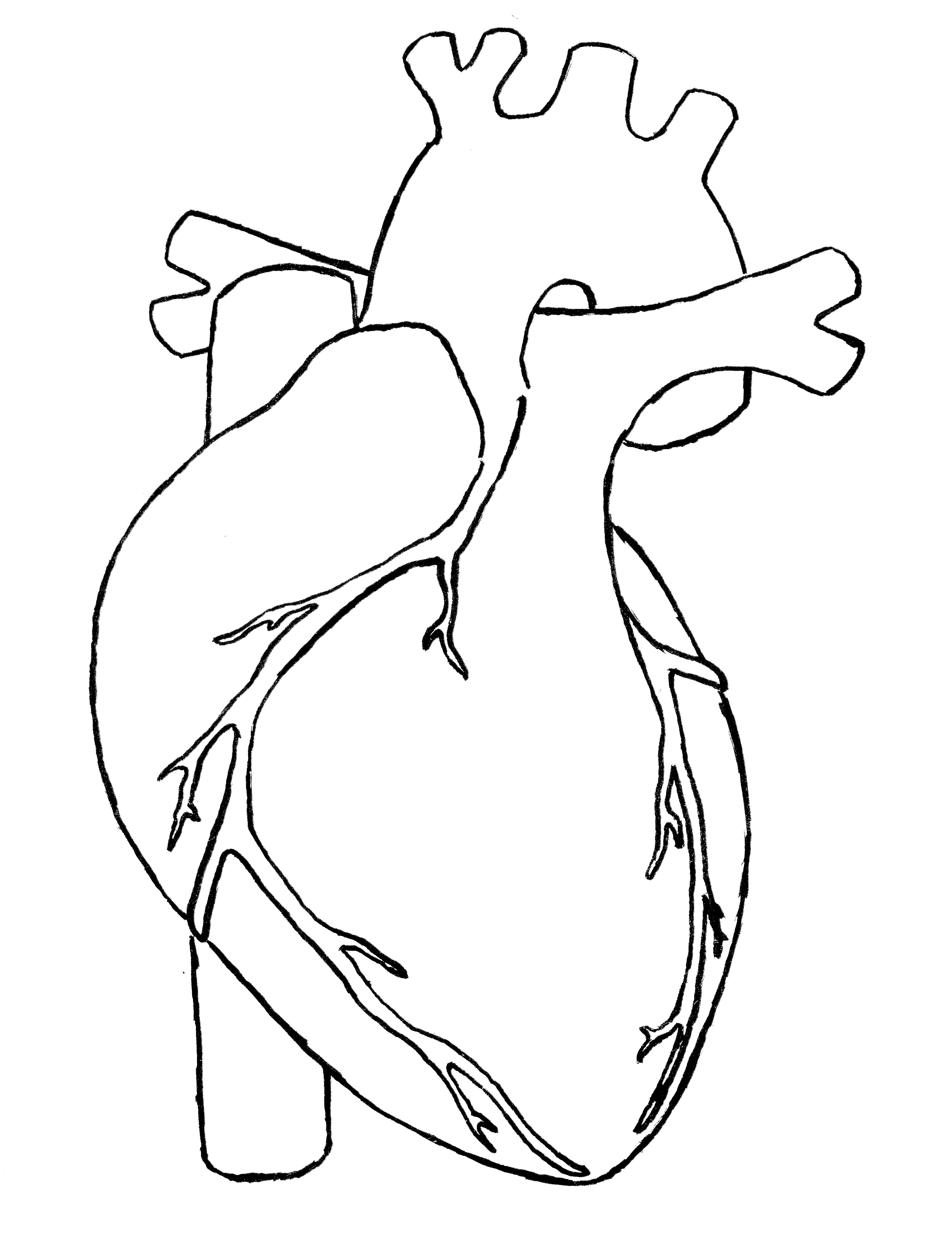 Real heart clipart jpg library download Real Heart Drawing | Clipart Panda - Free Clipart Images jpg library download