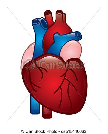Real heart clipart vector royalty free stock Real human heart clipart - ClipartFest vector royalty free stock
