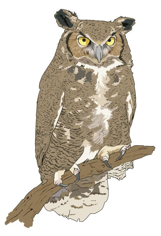 Real owl clipart image stock Real owl clipart - ClipartFest image stock