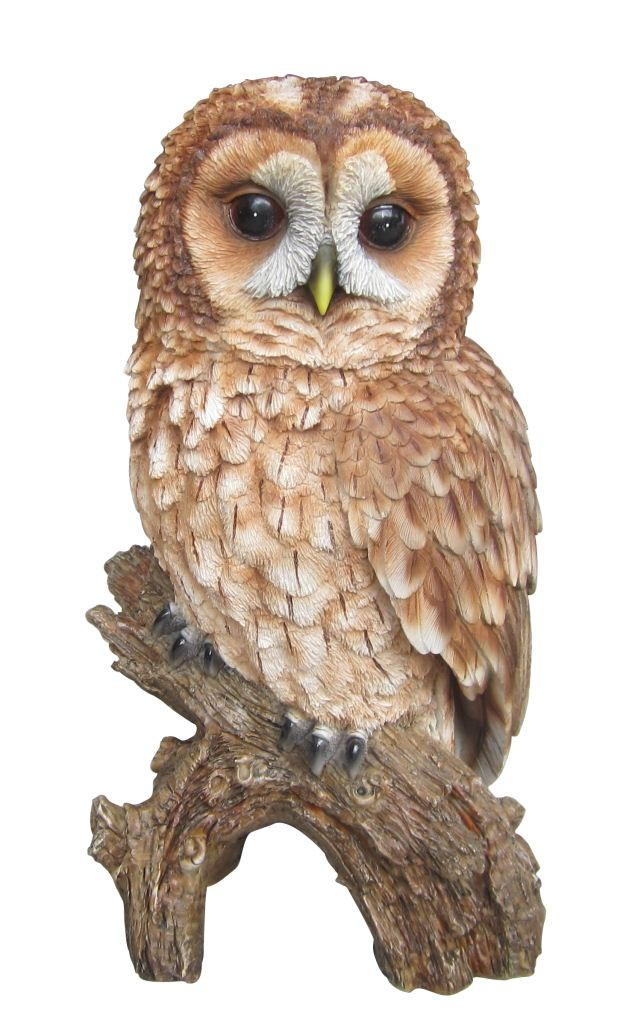 Real owl clipart freeuse stock Tawny owl clipart - ClipartFox freeuse stock