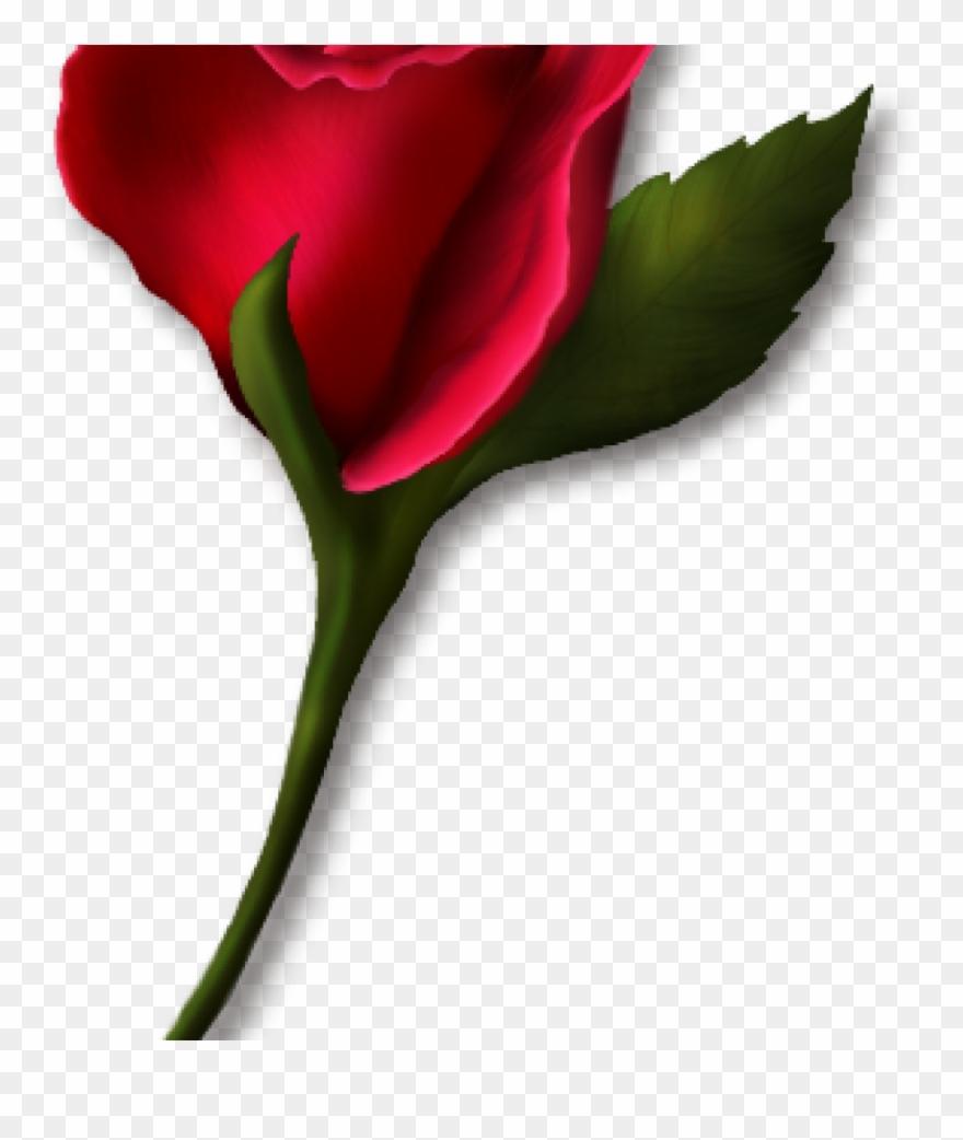 Real rose clipart image download Single Rose Clipart Single Rose Clipart Png Real Clipart ... image download
