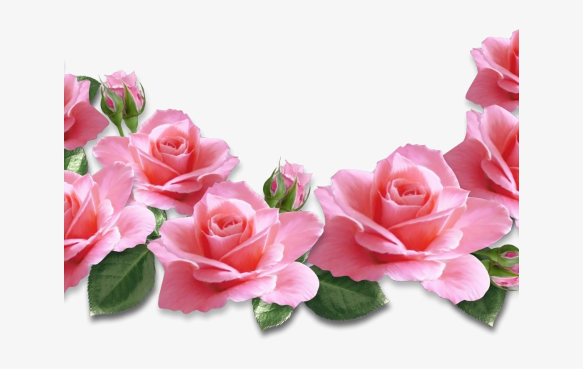 Real rose clipart png library download Pink Flower Clipart Real Rose - Pink Rose Clipart Png - Free ... png library download