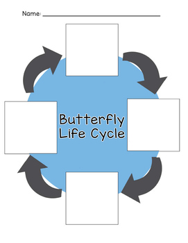 Realia clipart banner library download Butterfly Life Cycle Sequence Cards - Realia Photo and Clipart banner library download