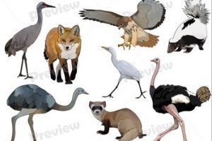 Realistic animal clipart vector library stock Royalty free animal clipart » Clipart Portal vector library stock