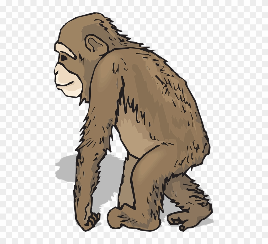 Chimpanzee Clipart Realistic - Animals With Fur Clipart ... jpg transparent library