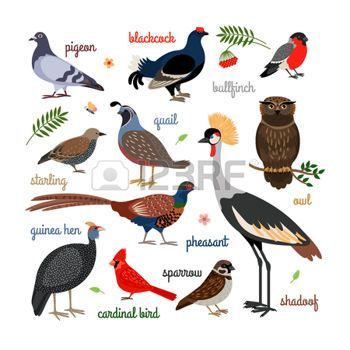 Realistic bird clipart side clip art library cartoon bird: Vector bird icons. Colorful realistic birds ... clip art library