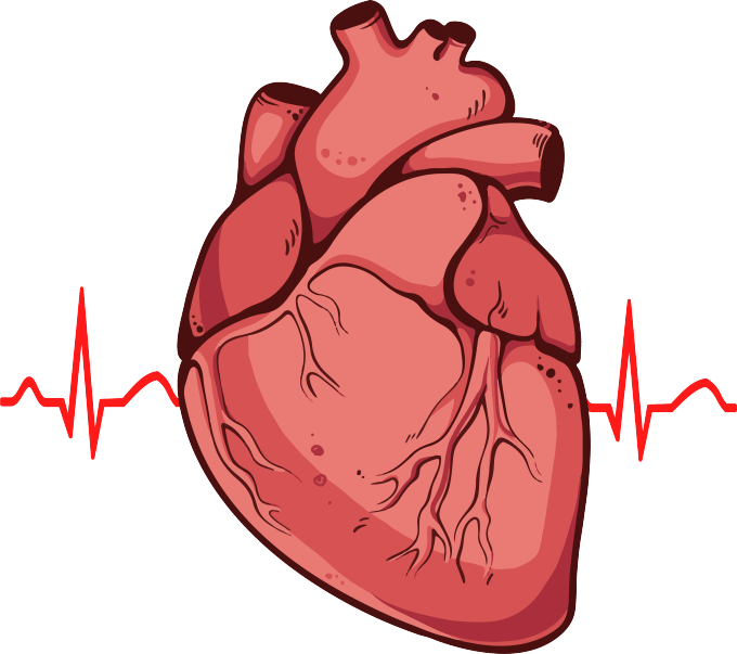 Realistic heart clipart vector freeuse Heart Pictures Real | Newwallpapers.org vector freeuse