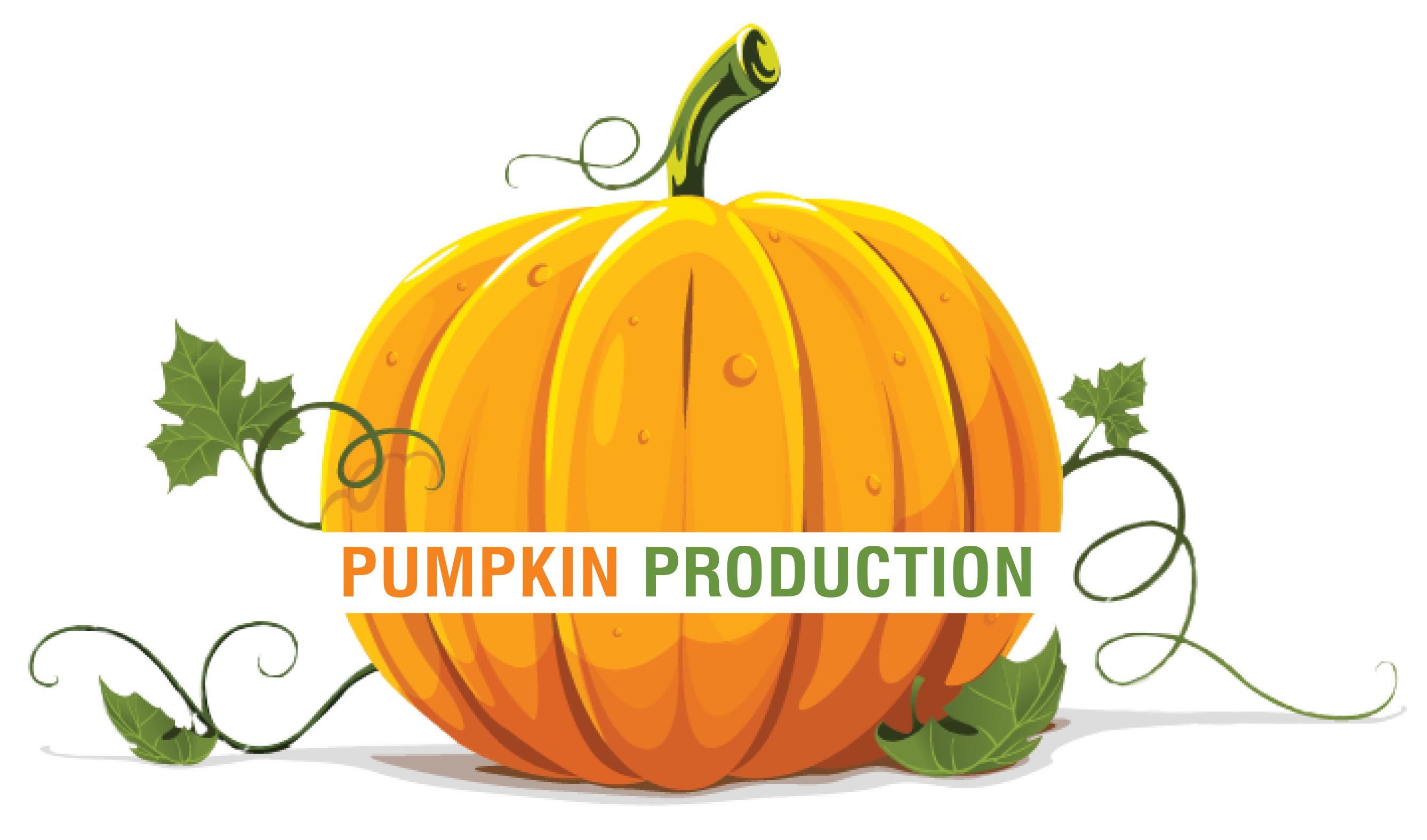 Realistic pumpkin clipart vector transparent library Pumpkin Production vector transparent library