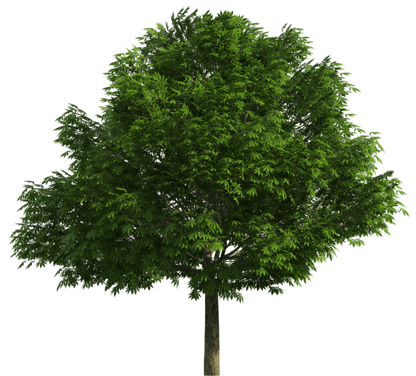 Realistic tree clipart png royalty free library realistic tree png - Free PNG Images | TOPpng png royalty free library