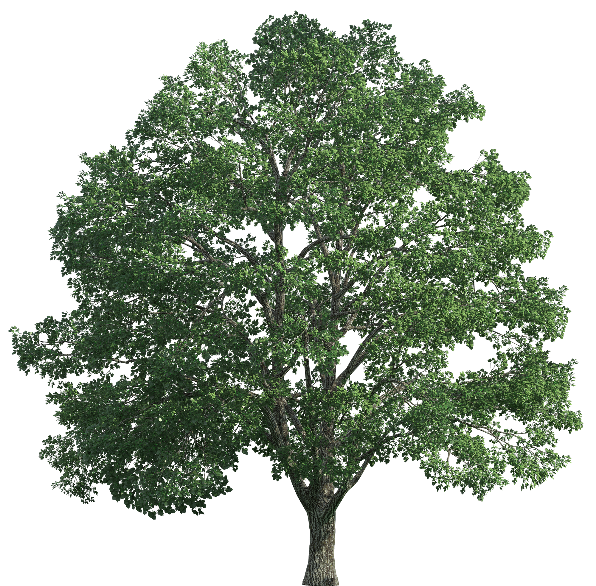 Realistic tree clipart picture freeuse library Tree Realistic PNG Clip Art - Best WEB Clipart picture freeuse library