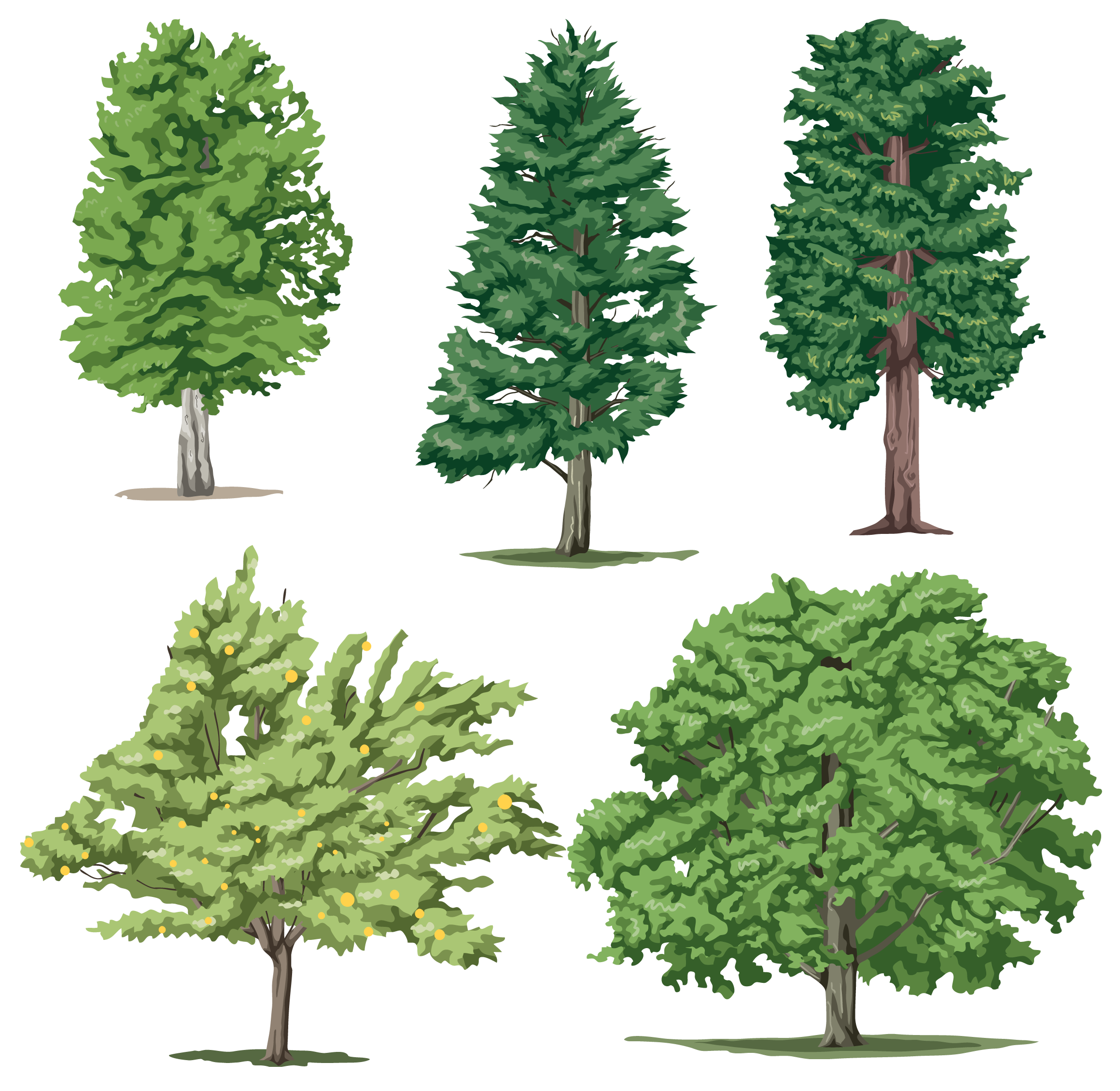 Realistic tree clipart vector freeuse download Tree Png Cartoon Realistic Trees All Types vector freeuse download