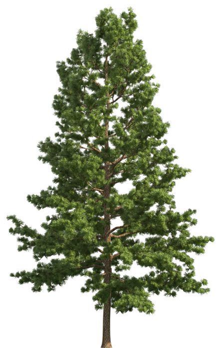 Realistic tree clipart image free stock Pine Realistic Tree PNG Clip Art image free stock