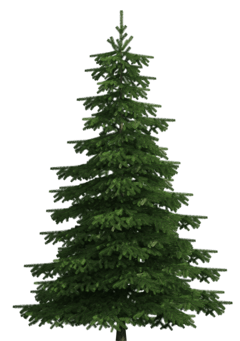 Realistic tree clipart png library stock realistic pine tree png - Free PNG Images | TOPpng png library stock
