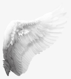 Angel Wings PNG Images | PNG Cliparts Free Download on SeekPNG banner free download