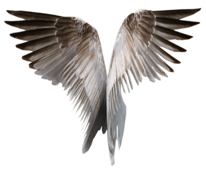 Realistic Wings Png Vector, Clipart, PSD - peoplepng.com royalty free stock