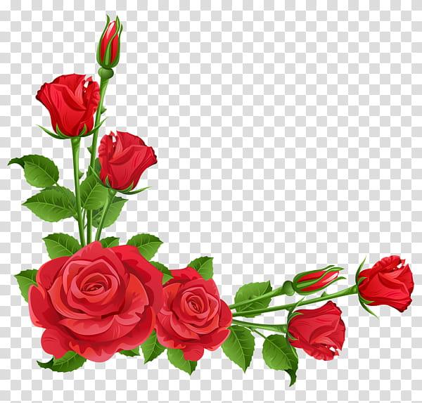 Free download | Roses, red rose illustration transparent ... svg transparent