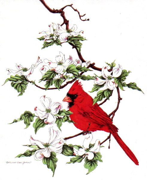 Red cardinal in flight dogwood branch west virginia clipart vector library cardinal on a dogwood branch | Home Sweet Home | Virginia ... vector library