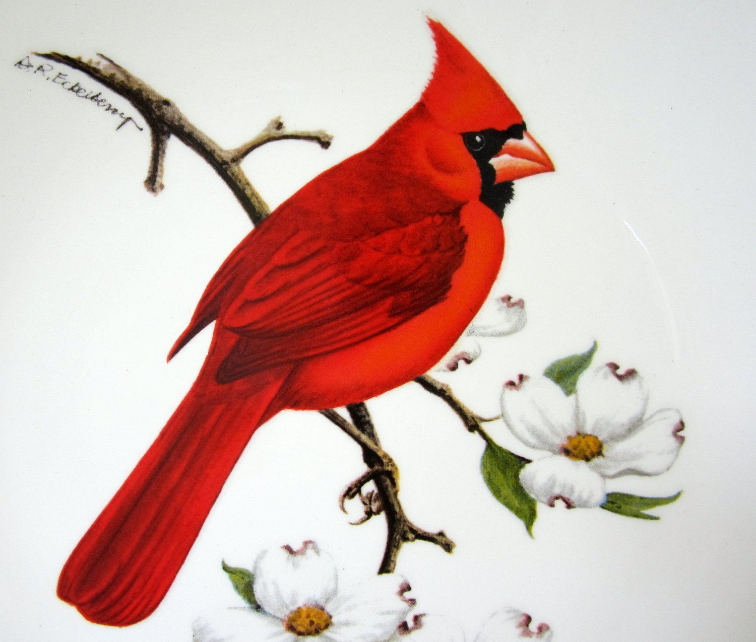 Red cardinal in flight dogwood branch west virginia clipart clipart transparent library Pin by Patricia Leng on Art - Colored Pencils - MCS ... clipart transparent library