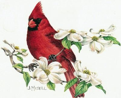 Red cardinal in flight dogwood branch west virginia clipart svg stock Virginia Cardinal Cliparts - Cliparts Zone svg stock