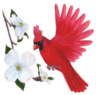 Red cardinal in flight dogwood branch west virginia clipart vector library download NC state bird the Cardinal, state flower the Dogwood ... vector library download