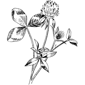 Red clover clipart image black and white stock Red clover clipart, cliparts of Red clover free download ... image black and white stock