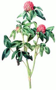 Red clover clipart clipart free stock Free Red-Clover Clipart - Free Clipart Graphics, Images and ... clipart free stock