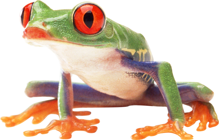 Red eyed tree frog clipart black and white banner royalty free Shrimps PNG | Animal PNG | Pinterest | Animal banner royalty free